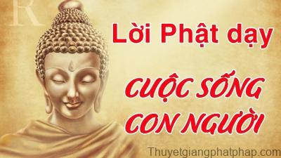 loi-phat-day-trong-cuoc-song